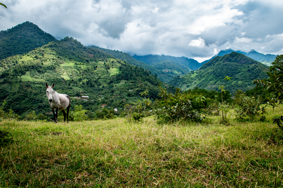 The rural community of Toquiancito lies on a steep hillside in Chiapas